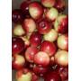 Яблоки Малиновка
