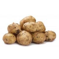 Картофель белый Краснодар